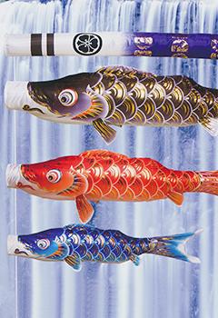 龍星鯉のぼり